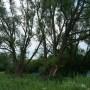 Cвященные ветла и камень Тараташ (село Актуково)