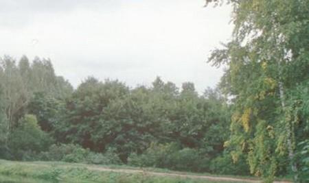 Парк усадьбы Левашовых в селе Каменка Пильнинского района