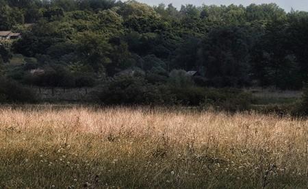 приусадебный парк Пазухиных